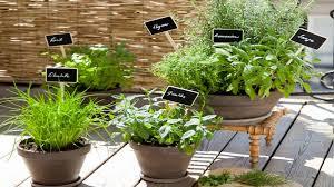plante aromatique cuisine comment planter des herbes aromatiques sur balcon