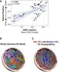 carcinogen susceptibility is regulated by genome architecture and