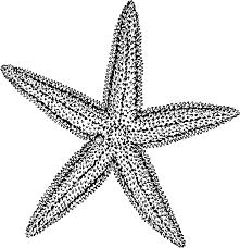 file starfish psf png wikimedia commons