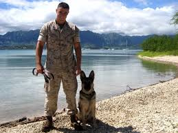 belgian shepherd malinois military 10 things you might not know about soldier dogs