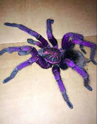 20 best my gales images on animals spiders and insects