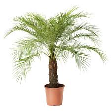 wondrous ikea house plants 84 ikea house plants plants 1566