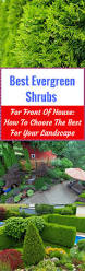 Landscaping Front Of House by Best Evergreen Shrubs For Front Of House How To Choose The Best
