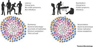 716 best environmental graphics images opening pandora u0027s box mechanisms of mycobacterium tuberculosis