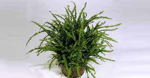 Indoor Decorative Trees For The Home 7 Indoor Plants That Purify The Air Around You Naturally