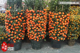 Flower Decoration For New Year by 2017 Hong Kong Chinese New Year Flower Markets Nextstophongkong