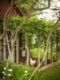 Build A Dream House 25 Best Chicken Coop Designs Ideas On Pinterest Chicken Coops