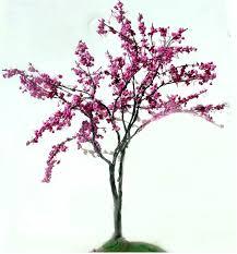 cercis siliquastrum casa de flores flowers borne in the early