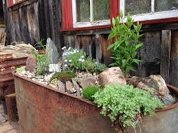 Galvanized Trough Planter by Growing With Plants How To Make A Real Alpine Trough Garden