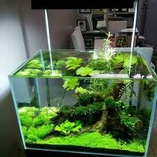 Aquascape Store Some Serious Scape Inspiration By Aqua Legend Concept Shop