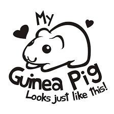 guinea pig meme blank by kna on deviantart