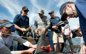 betsy the great white shark tracked off southwest florida news