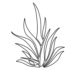 sea plants coloring pages creativemove me