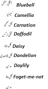 Names And Images Of Flowers - names of flowers in english and urdu with pictures