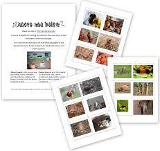printable animal activities preschool science activity animals above and below ground free