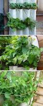 287 best gardening images on pinterest plants gardening and