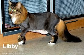 catnip inn houston cat boarding and grooming