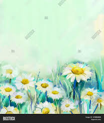 oil painting daisy flowers field image u0026 photo bigstock