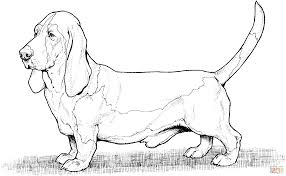bassett hound dog coloring page free printable coloring pages