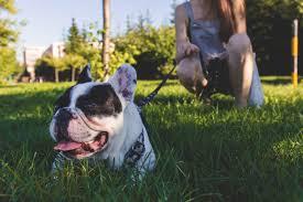 tips to grow a pet friendly non toxic garden animal bliss