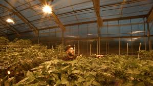 Greenhouse Lights How To Measure And Calculate Supplemental Light In A Greenhouse Or