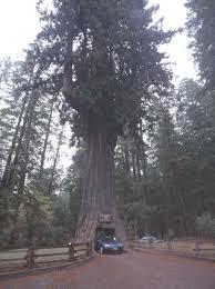 Chandelier Tree California Chandelier Tree