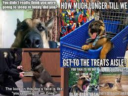 Funny German Shepherd Memes - 20 paw esome german shepherd memes american kennel club