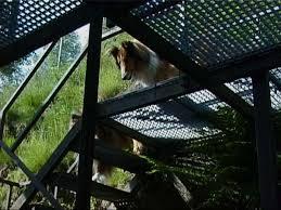 gitter treppe belana auf der gittertreppe hunde alles rund um den hund