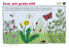 wildlife watch activity sheets
