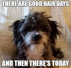 Bad Hair Day Meme - image tagged in puppy bad hair day bad day messy puppy imgflip