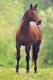 616 best thp images on pinterest horses horse photography and