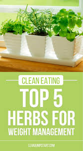 Herbs Indoors Easy Herbs Top 5 Healthy Herbs For Weight Management