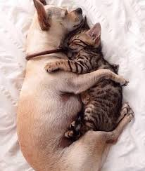 Snuggle Meme - put me like 盞 the snuggle is real