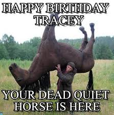 Horse Birthday Meme - happy birthday tracey cheval de ouf meme on memegen