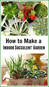 48 best succulents images on pinterest gardening plants and how to make an indoor succulent dish garden