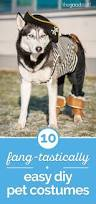 the most popular dog costumes popsugar pets 10 fang tastically easy diy pet costumes thegoodstuff