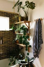 best 25 plant decor ideas on pinterest house plants best 25 plants in bathroom ideas on pinterest bathroom plants home