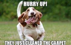 Carpet Cleaning Meme - carpet cleaners london professional carpet cleaning company in