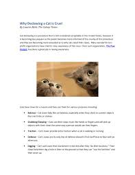 It U0027s A Cover Up by Why Declawing A Cat Is Cruel By Revilsoy Issuu