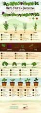467 best herb garden images on pinterest herbs garden indoor