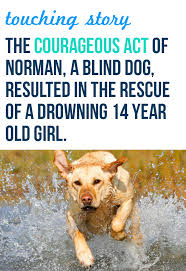 Pictures Of Blind Dogs Blind Dog Rescued A Drowning Labrador Retriever Labradors