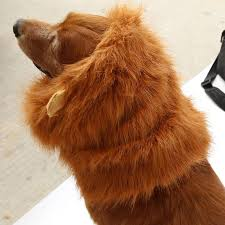 Lion Halloween Costumes Dogs Popular Dog Lion Halloween Costume Buy Cheap Dog Lion Halloween