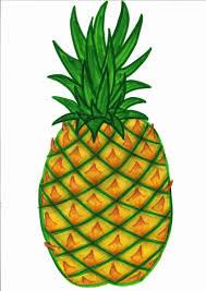 pineapple clip art 34672