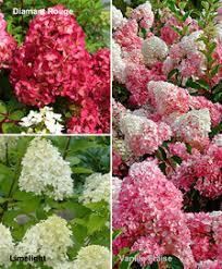 buy ornamental shrubs bakker