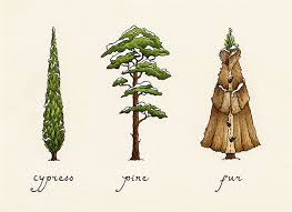 Tree Puns Quirks And Puns May On Behance
