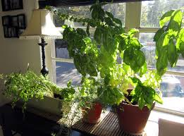 Indoor Garden Ideas Herbs Ideas