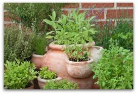 herb garden planter container gardens indoors or outdoors