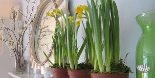 houseplants ornamental plants indoor plant living for a