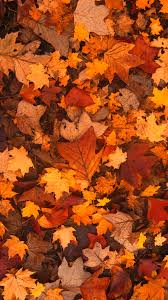 fall backgrounds phone 25 backgrounds phones ideas