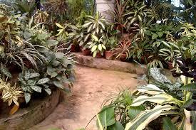 peradeniya royal botanical gardens in kandy sri lanka